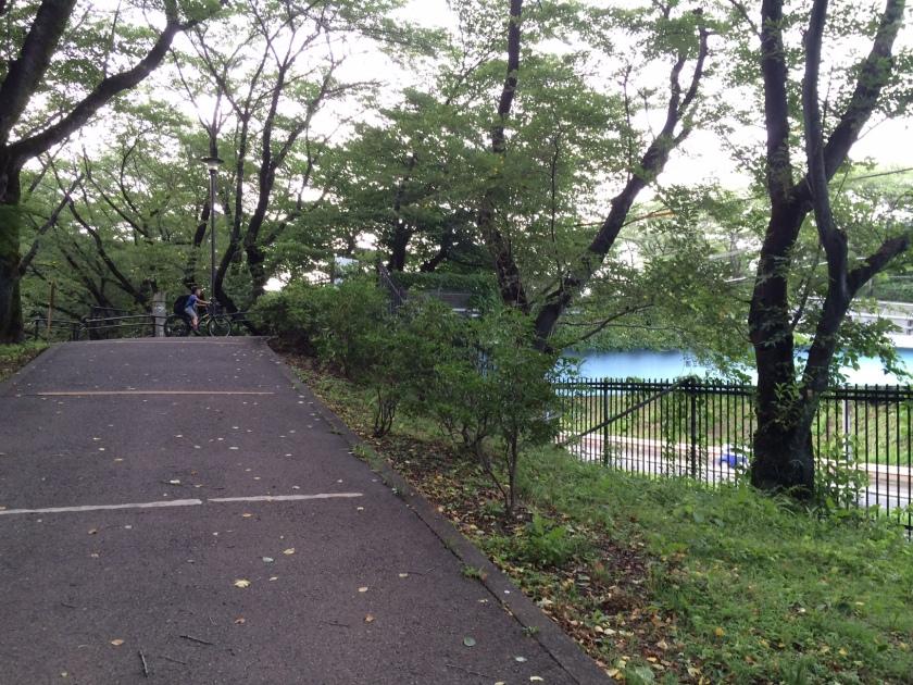 野川公園から見える東八道路