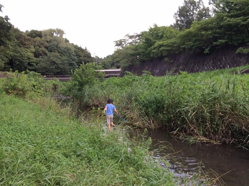 野川で生き物を探す小学生