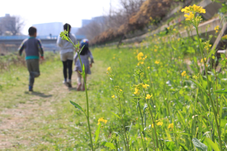 つつじケ丘・神代団地内の公園めぐりと春の野川遊び