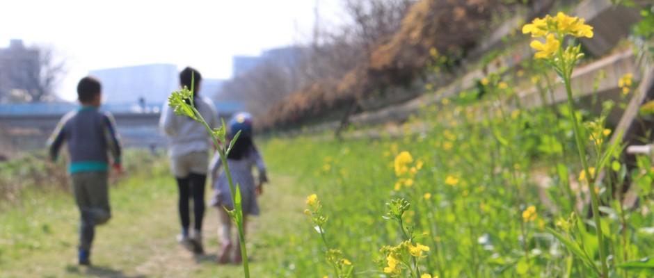 つつじケ丘・神代団地内の公園めぐりと春の野川遊びの画像