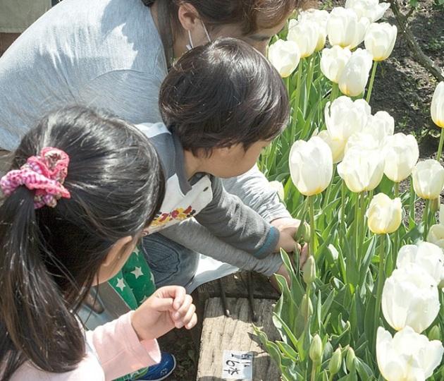 春満開のアンジェでお花摘みや花束づくり体験