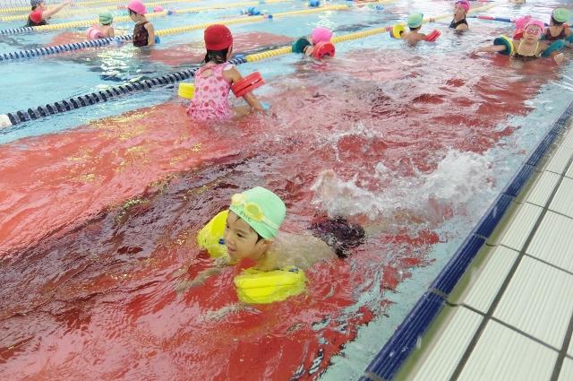 アクラブ調布 調布金子スイミングスクール ジュニア水泳 スイミング