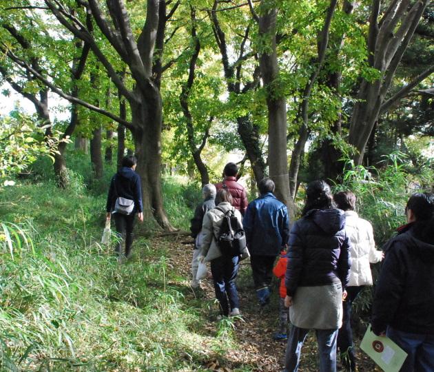 雑木林の自然を堪能!下布田遺跡の自然観察会
