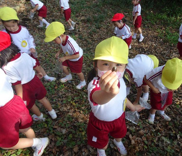 学園の森でどんぐり拾い マリアの園幼稚園
