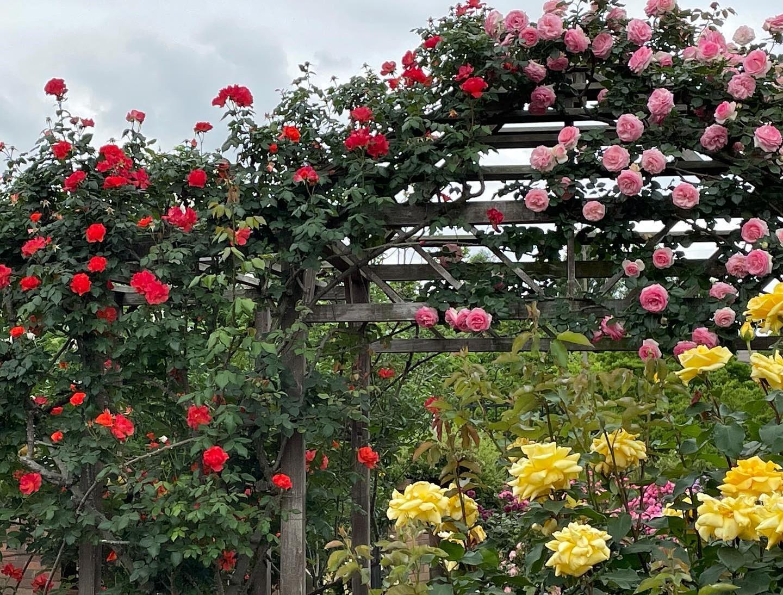 色とりどりに咲くたくさんの花をSNSで発信@京王フローラルガーデンアンジェ